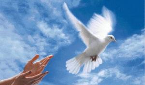 colomba-della-pace-e-dellamore